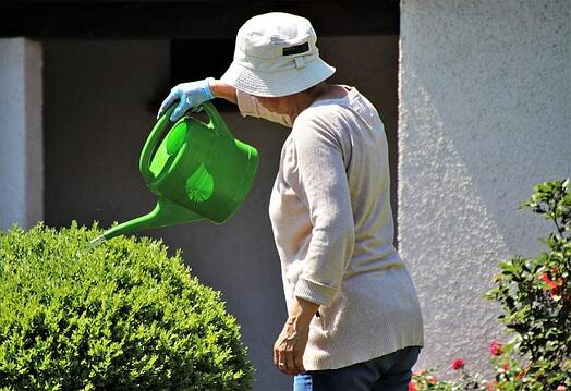 woman watering bush_assisted living houston